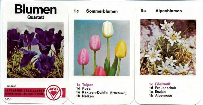 Blumen-Quartett von ASS